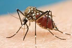 Dawn Ellmore - BioLytical Laboratories Patents New Zika Virus Detection Method