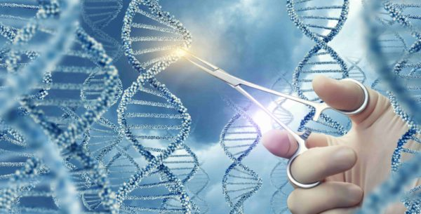 Dawn Ellmore Employment - gene editing tool patents
