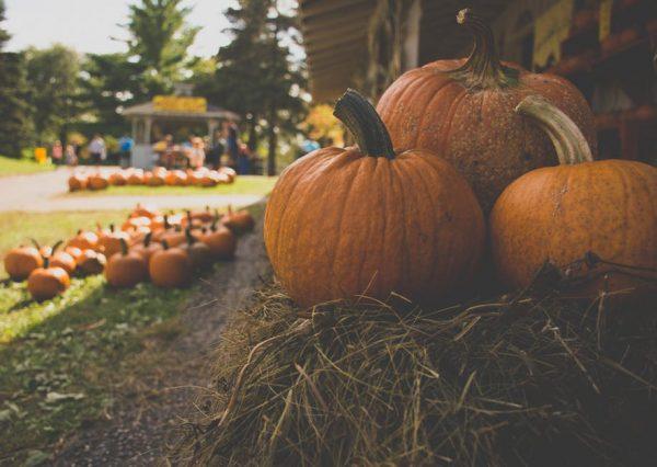 Dawn Ellmore rounds up the five spookiest pumpkin patents