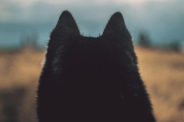 Dawn Ellmore - Wolves